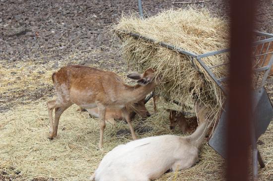 Gli animali mangiano cose genuine picture of la casa del for Animali laghetto