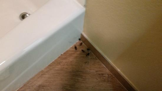 Cricket Hordes In Our Room Picture Of Sunday House Inn