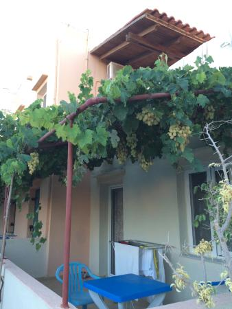 Michalis : Lush and fruitful grapevines by the pool