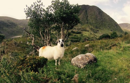 Glencar, أيرلندا: Bridia Valley