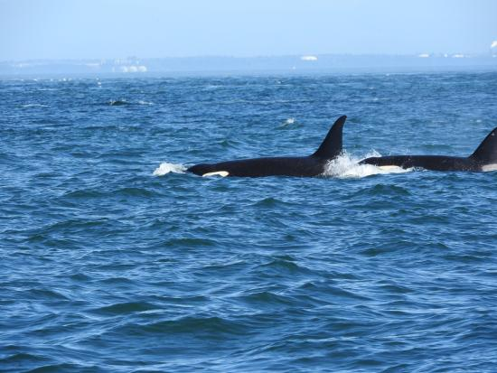 Great adventure - Picture of Ocean EcoVentures Whale Watching ...