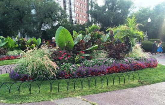 Fall In The Boston Public Garden Picture Of Boston