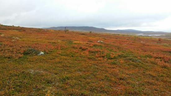 Arjeplog, Sverige: Pieljekajse Nationalpark