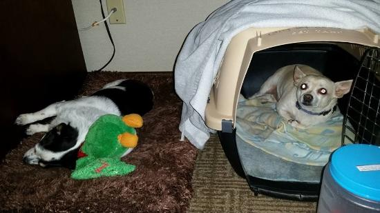 Pets Bedded Down For The Night Picture Of Comfort Inn Boonville