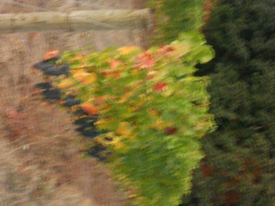 Elk Cove Vineyards: Pinot Noir waiting for harvest