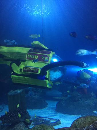 Fish Sharks Legos Starfish Etc Picture Of Sea Life
