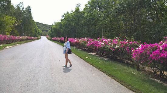 Vinpearl Luxury Nha Trang: island road
