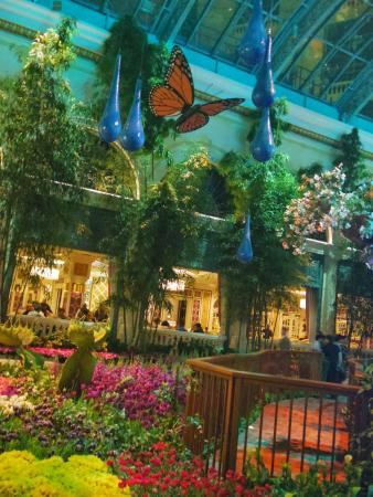 Picture Of Conservatory Botanical Gardens At