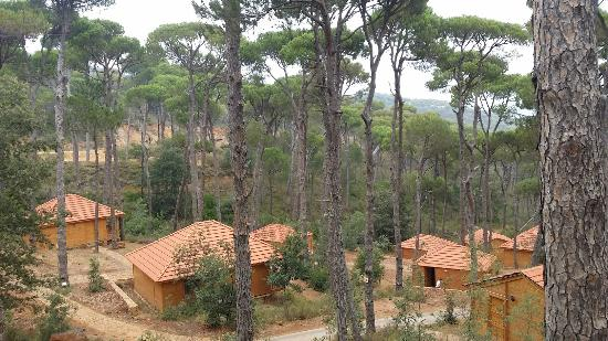 view of the hotel picture of la maison de la foret jezzine tripadvisor. Black Bedroom Furniture Sets. Home Design Ideas