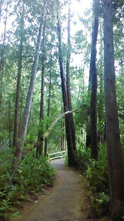 Florence, OR: peaceful green space