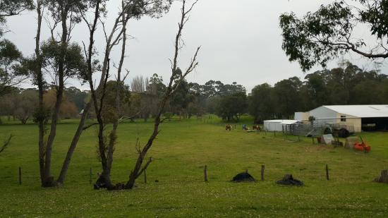 Greenfield Farmstay