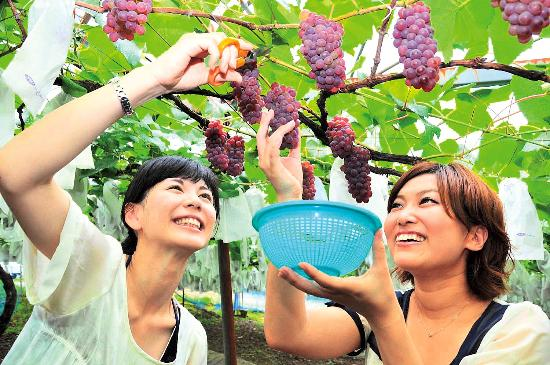 Shoren Temple Kankomura Grape Picking