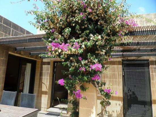 Mellieha Holiday Centre: Billed fra gårdhaven ved vores bungalow