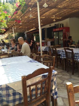 Taverna foki