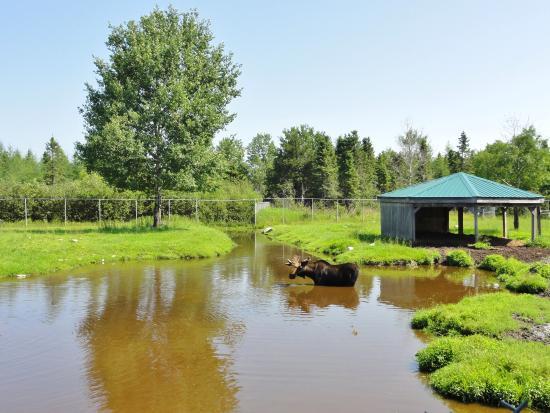 Amos, แคนาดา: Un des enclos
