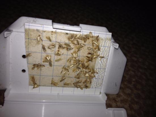 Hilton Edinburgh Grosvenor: val met beestjes onder het bed vandaan in kamer 3.