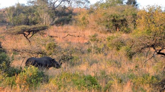andBeyond Phinda Rock Lodge: Our first Black Rhino