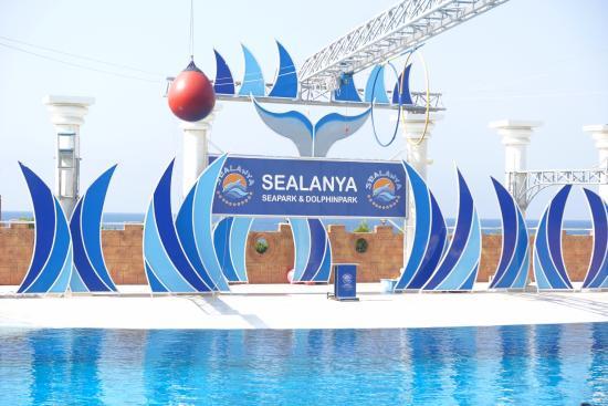 ууу - Picture of Sealanya Dolphinpark, Antalya - TripAdvisor