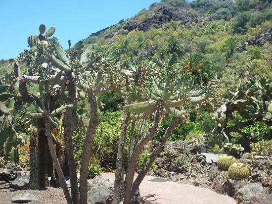 Jardin canario bild fr n jardin botanico viera clavijo - Jardin botanico las palmas ...