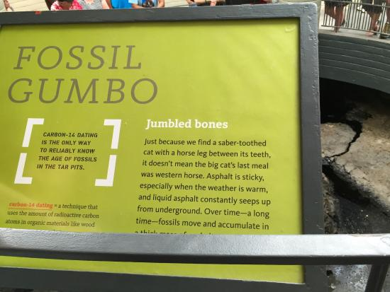 La Brea Tar Pits and Museum: description of bones in Observation Pit