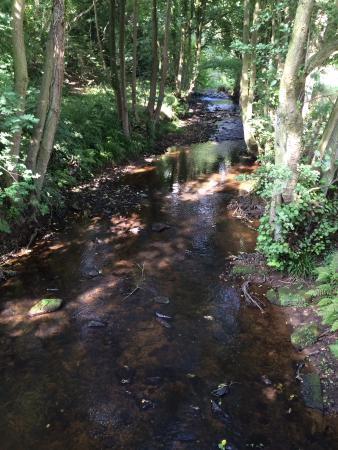 The Beacon: Farndale Nature Reserve