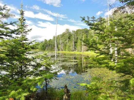 Algonquin Highlands, Kanada: Ballade