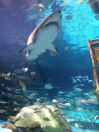 Picture Of Ripley 39 S Aquarium Of The Smokies