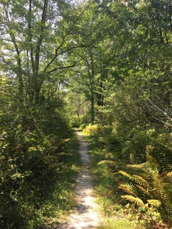 Swanton, VT: Beautiful short nature walk.