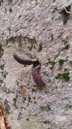 Grafton, MA: Ancient iron wedge still embedded in the rock