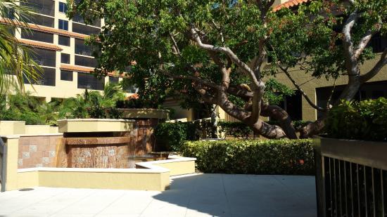 Eagle's Nest on Marco Beach: Courtyard