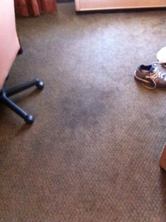 Holiday Inn Express Hotel & Suites - Pell City: Stain on carpet