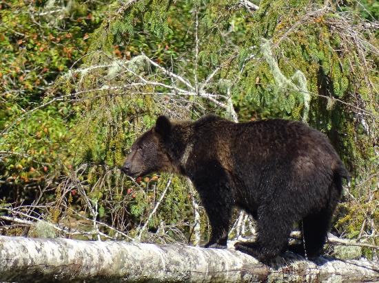 Klemtu, Kanada: Spirit Bear Lodge