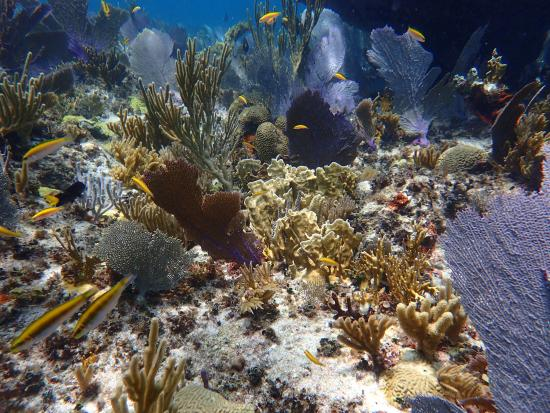 Man-O-War Cay: Snorkeling with Dive Time