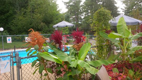 Bay Top Motel: Nice pool