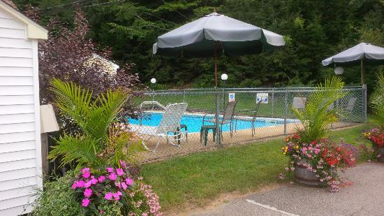 Bay Top Motel: Outdoor pool