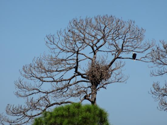 Sweet Magnolia Inn Bed and Breakfast: Saw an Eagle at St. Mark's Lighthouse
