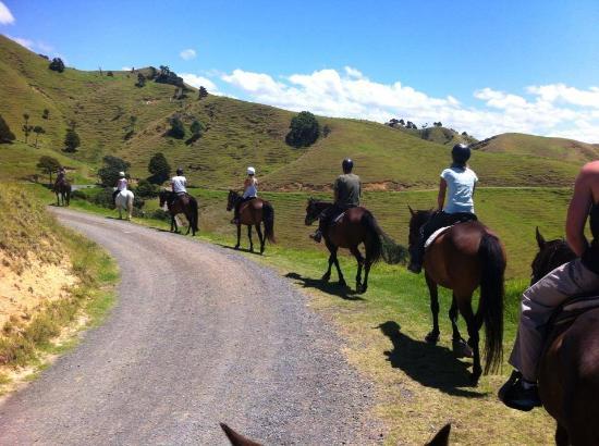 Whangarei, Nuova Zelanda: Horse trekking