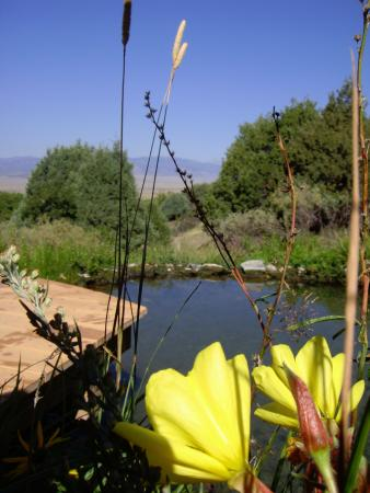 Villa Grove, โคโลราโด: The Meadow Pool