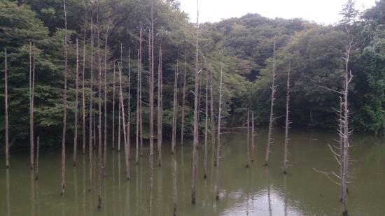 Oyamadairi Park: 大田切池の枯れ木立。
