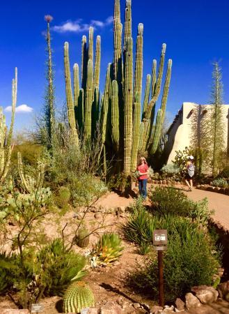 Picture Of Desert Botanical Garden Phoenix Tripadvisor