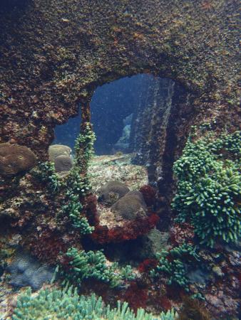 Marine Adventures: Shipwreck