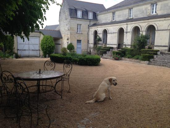 Le Coudray-Macouard, ฝรั่งเศส: Blanche the family dog at the front of the house