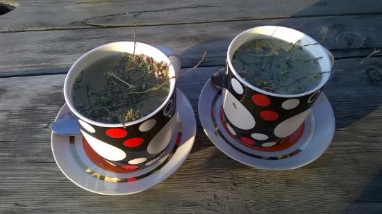 Shenako, Georgia: tea