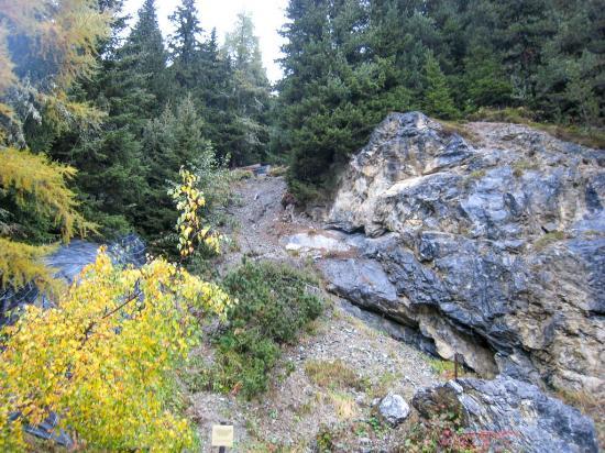 Botanischer Garten Alpinum Schatzalp: Alpinum