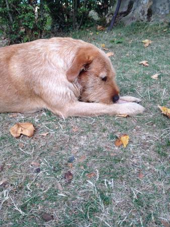 Auberge de la Tuilerie: Emile the dog! Such a cutie!