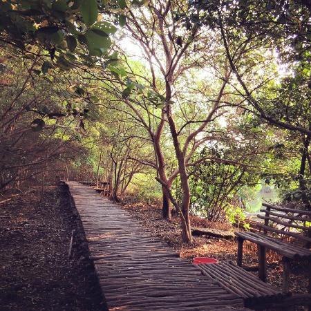 Pemandangan Hutan Bakau Picture Of Mangrove Forest Jakarta