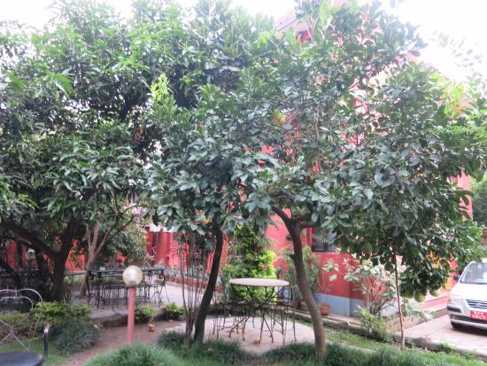 Hotel Blue Horizon: jardin de l'hotel
