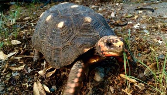 Salines Garden Cottages : The turtle