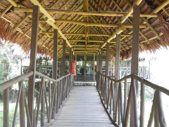 Amazonia Expeditions' Tahuayo Lodge: Walkway to Hammock Room at Tahuayo Lodge