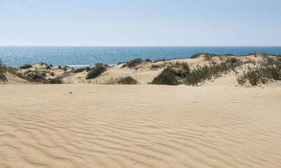 Marjal Guardamar Camping & Resort: Playa de Guardamar